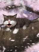 プレビュー(猫)